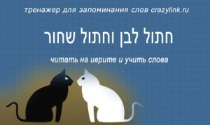 חתול לבן וחתול שחור
