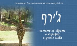 Все о жирафах.