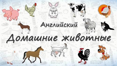 Домашние животные на английском.