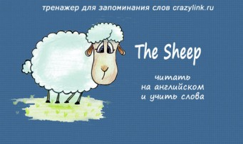 The Sheep