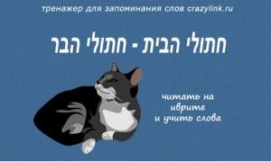 חתולי הבית
